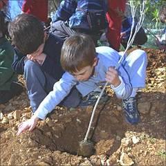 Planteaza-copaci-si-primesti-bani-de-la-Ministerul-Mediului